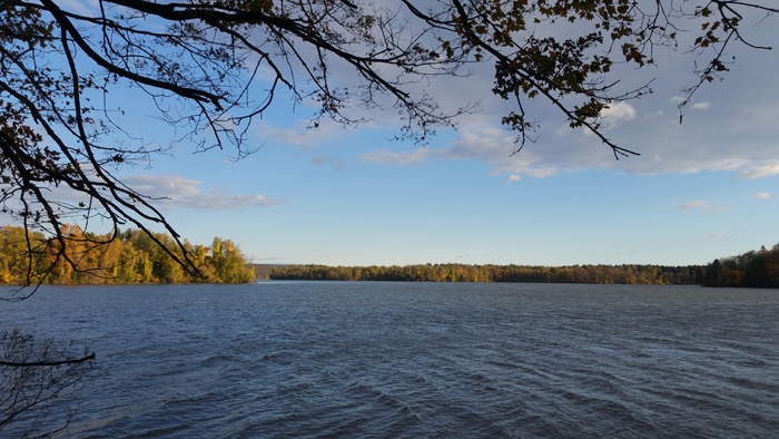Lake from the evergreen grove
